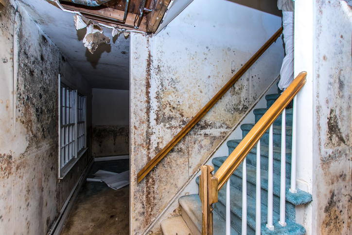 Mold growing up the staircase and walls of a property