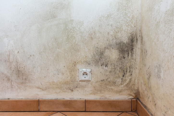 mouldy wall, mold